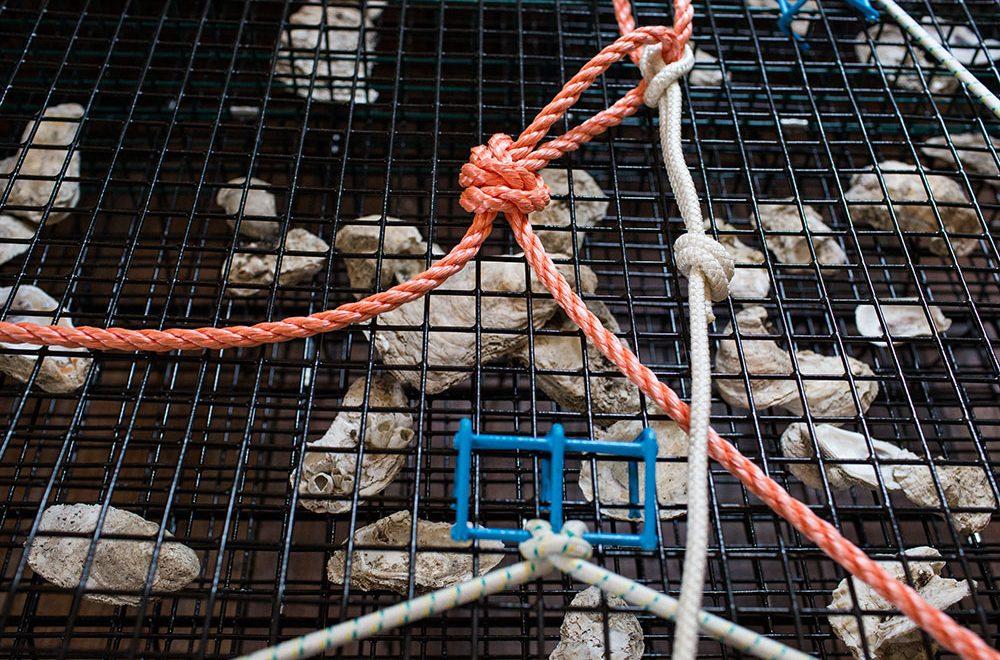 urbanna-cage